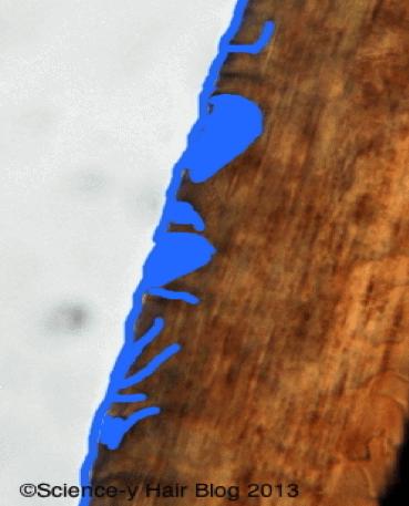 image of a hair fibre
