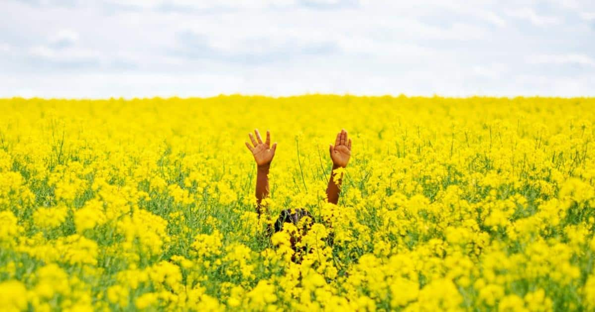 an image of a girl lifting her hands up in a field of yellow flowers